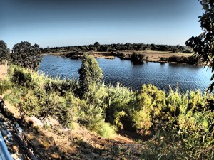 Swan River on Magic Mode